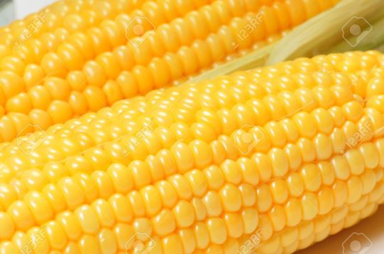 7033948-Corn-cob-closeup-view-for-background-or-texture-Stock-Photo