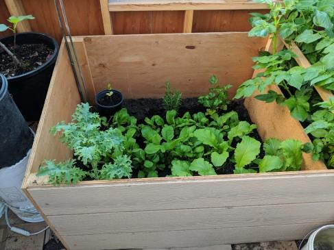 Kale, mustard greens, radishes